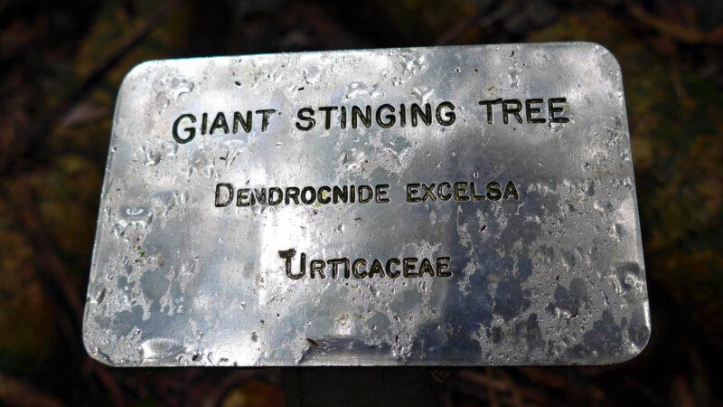 GiantStingingTree-L1070122-mod